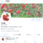 Twitter のプロフィール画像(アイコン)でイメージアップ、詳しい変更方法。